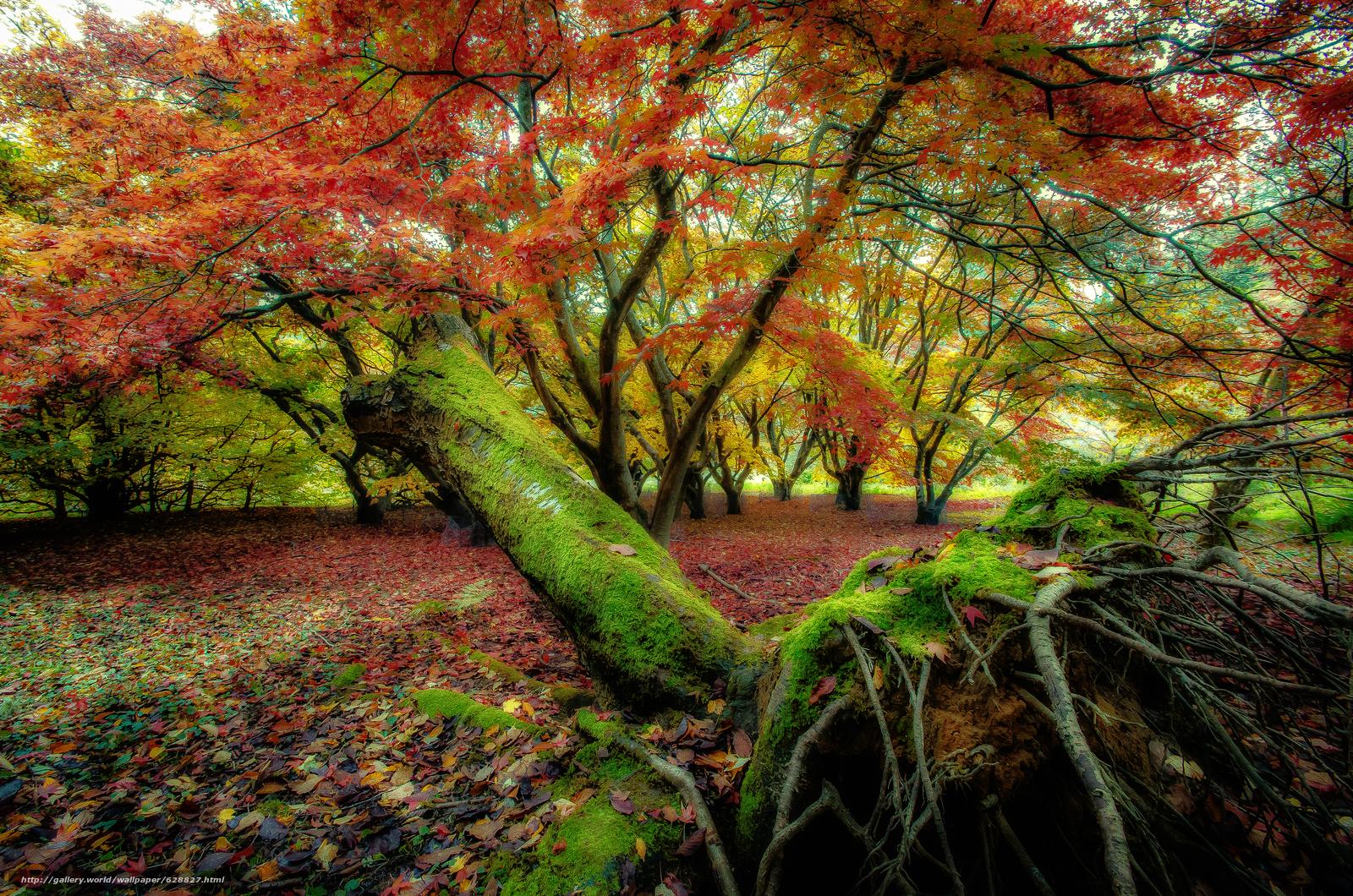 осень, деревья, лес, природа