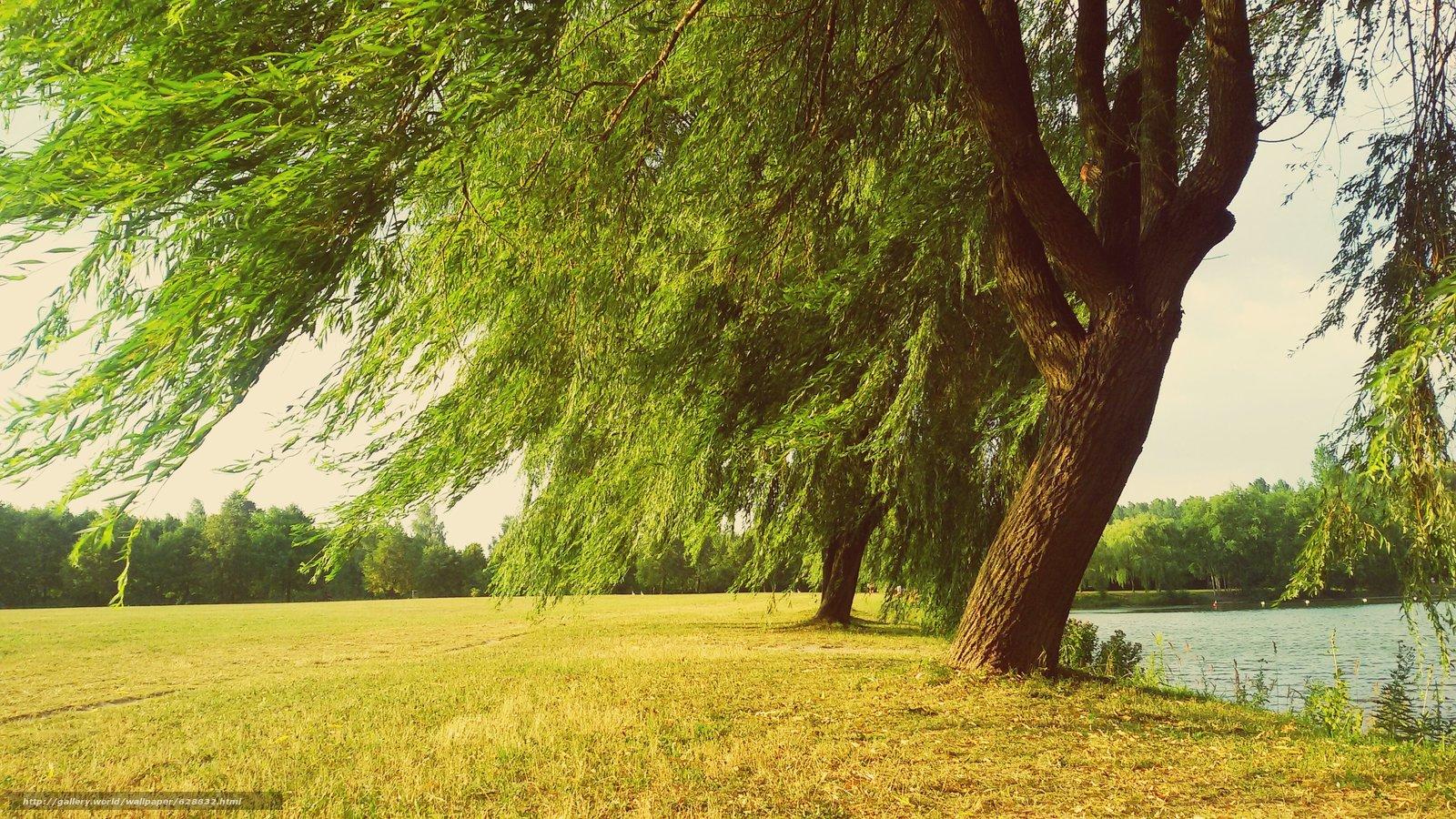 поле, деревья, река, пейзаж