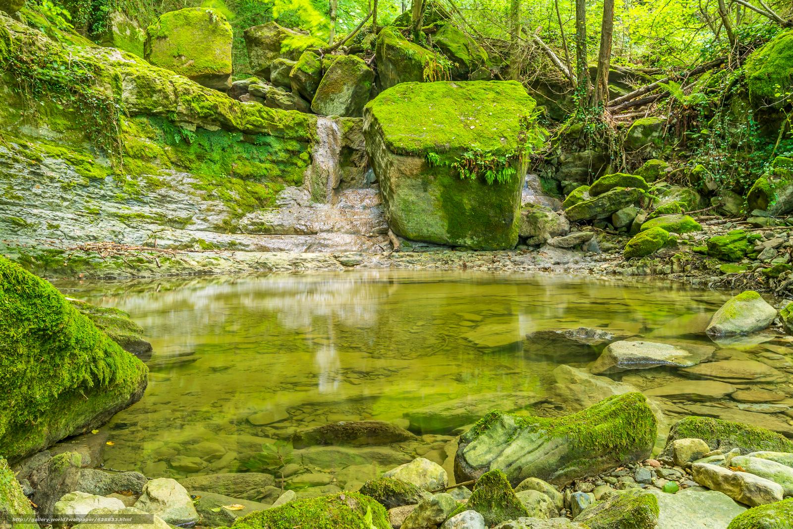 лес, деревья, скалы, природа