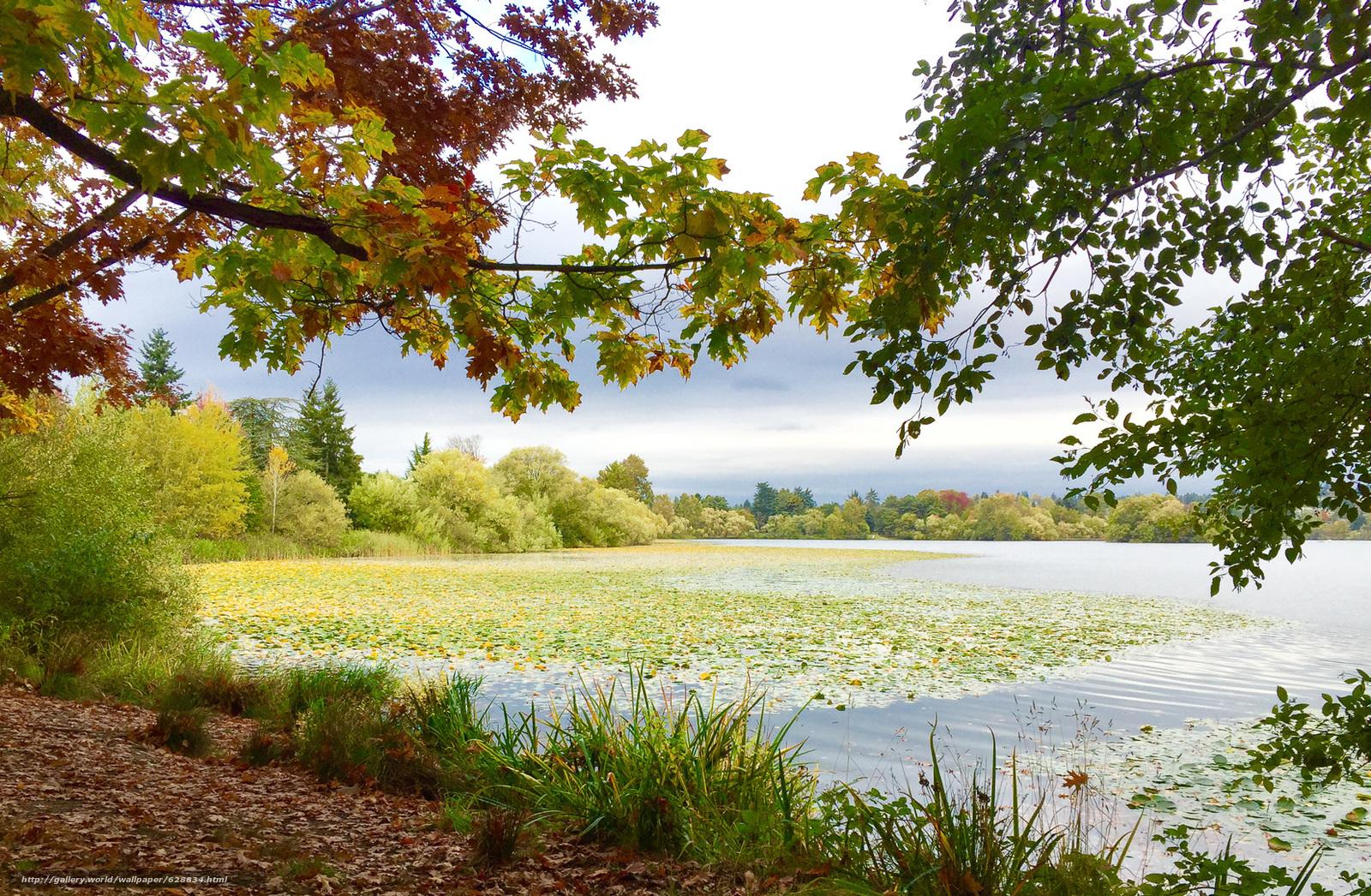 осень, озеро, деревья, пейзаж