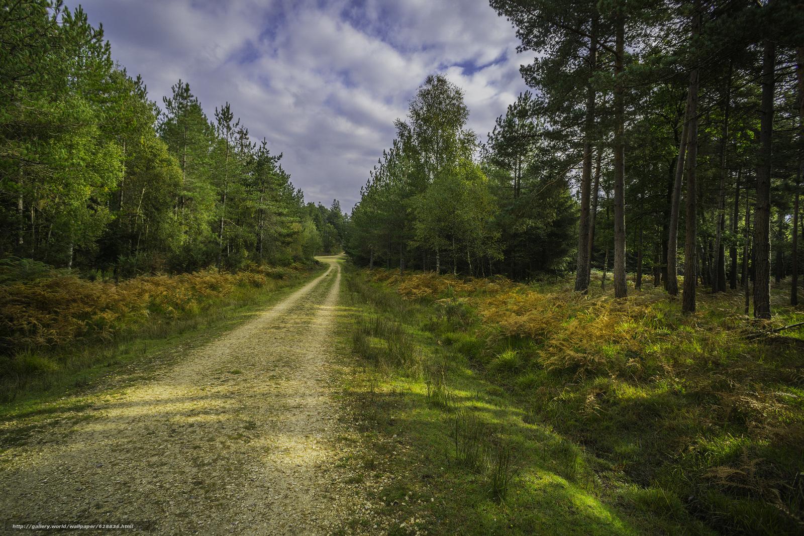 осень, лес, дорога, деревья, пейзаж