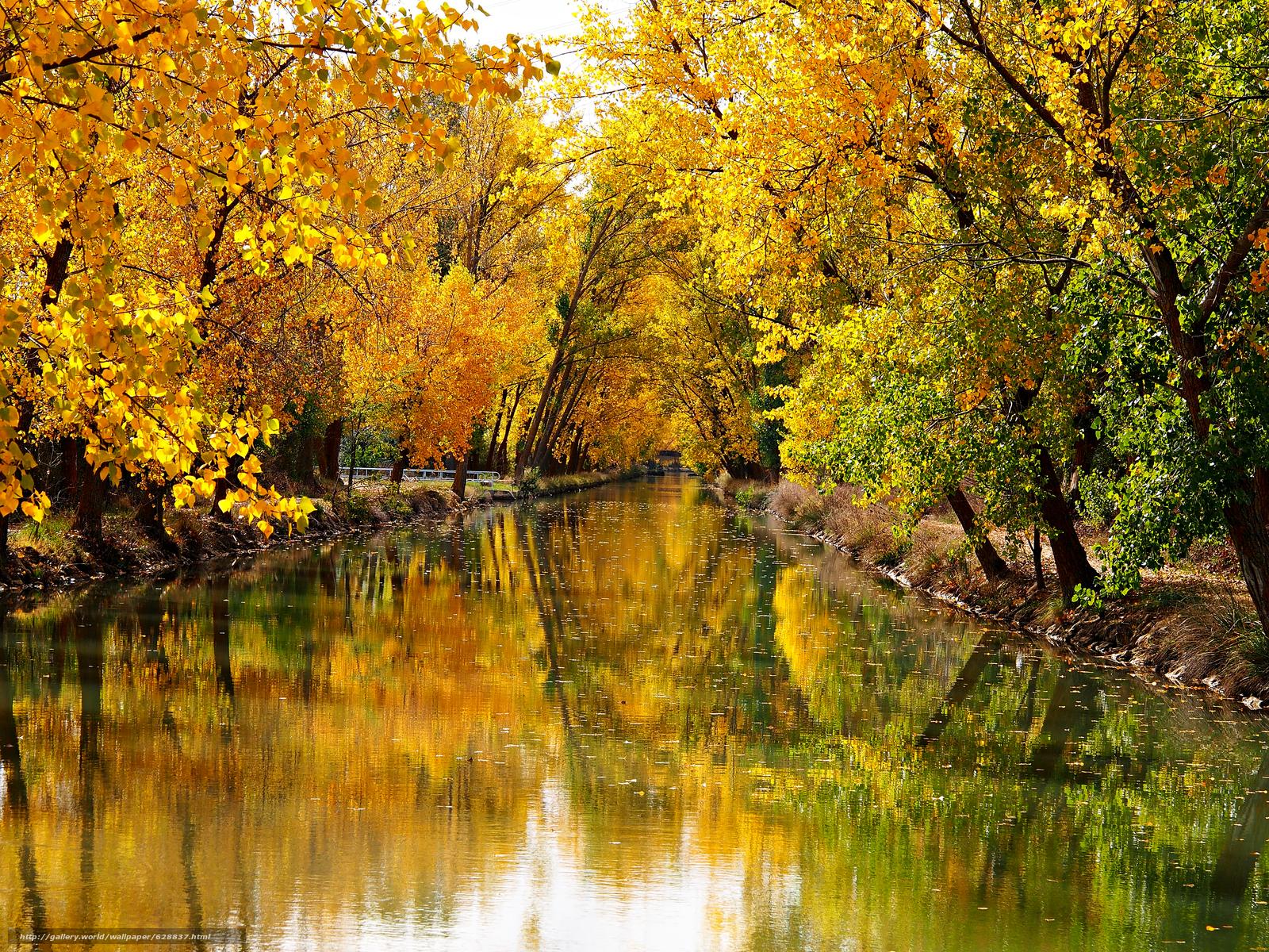 осень, канал, деревья, пейзаж