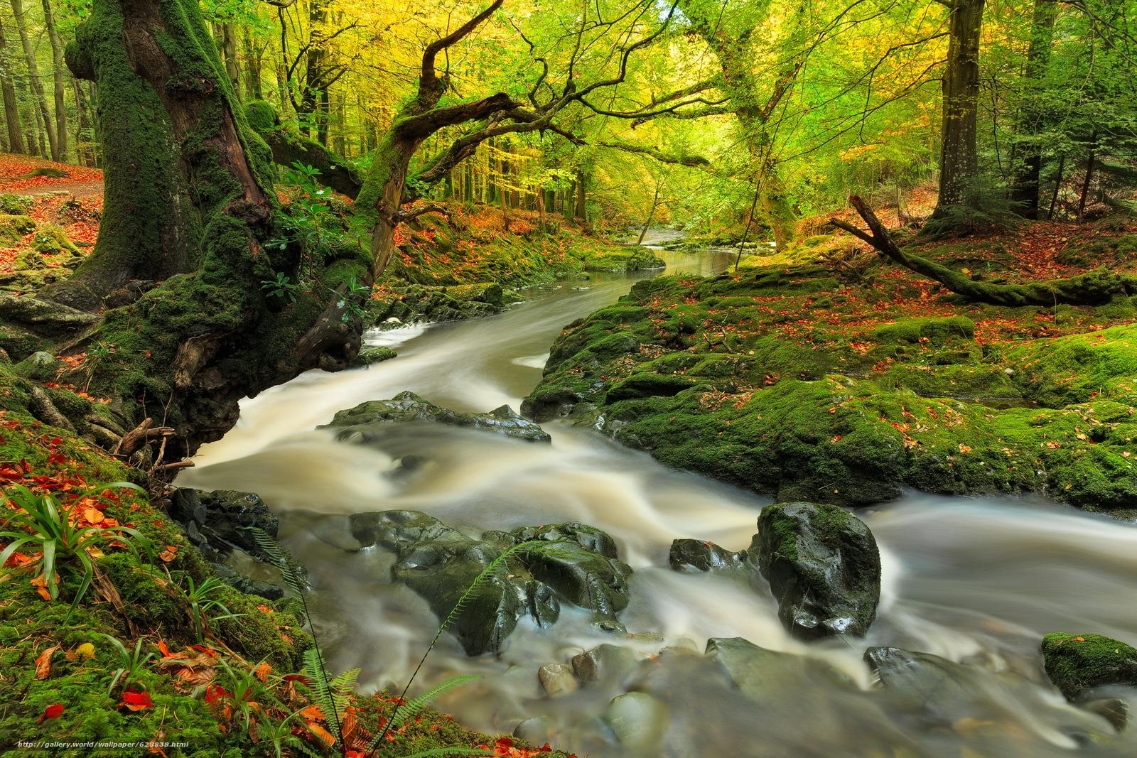 осень, лес, река, деревья, природа