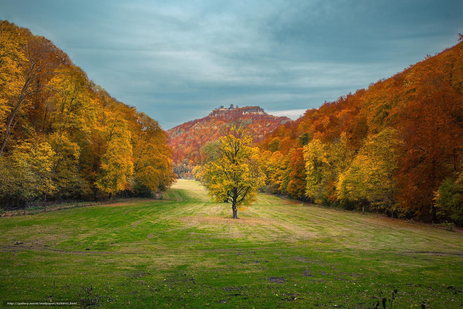 осень, поле, деревья, горы, пейзаж