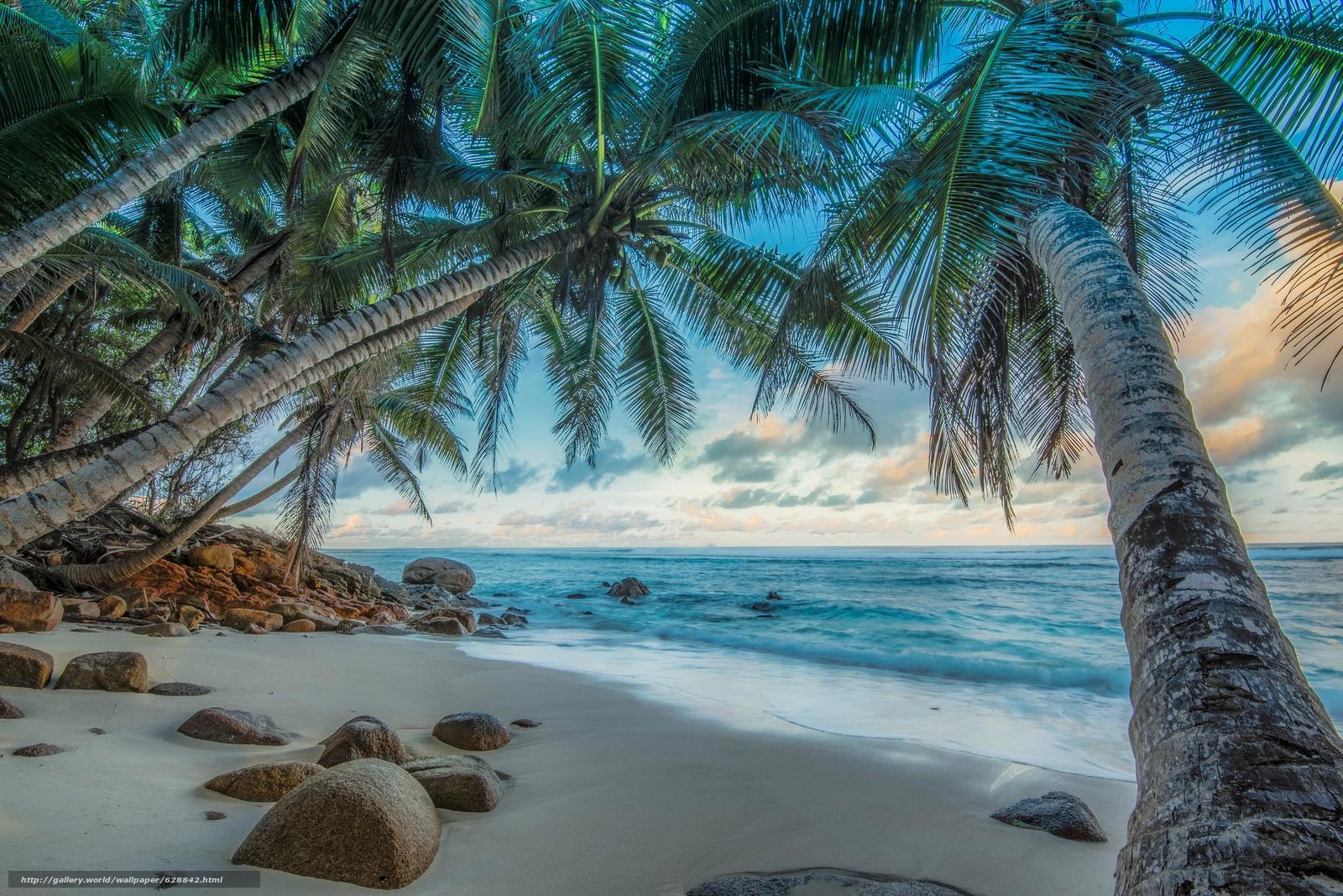 Seychelles, море, пальмы, берег, камни, пейзаж