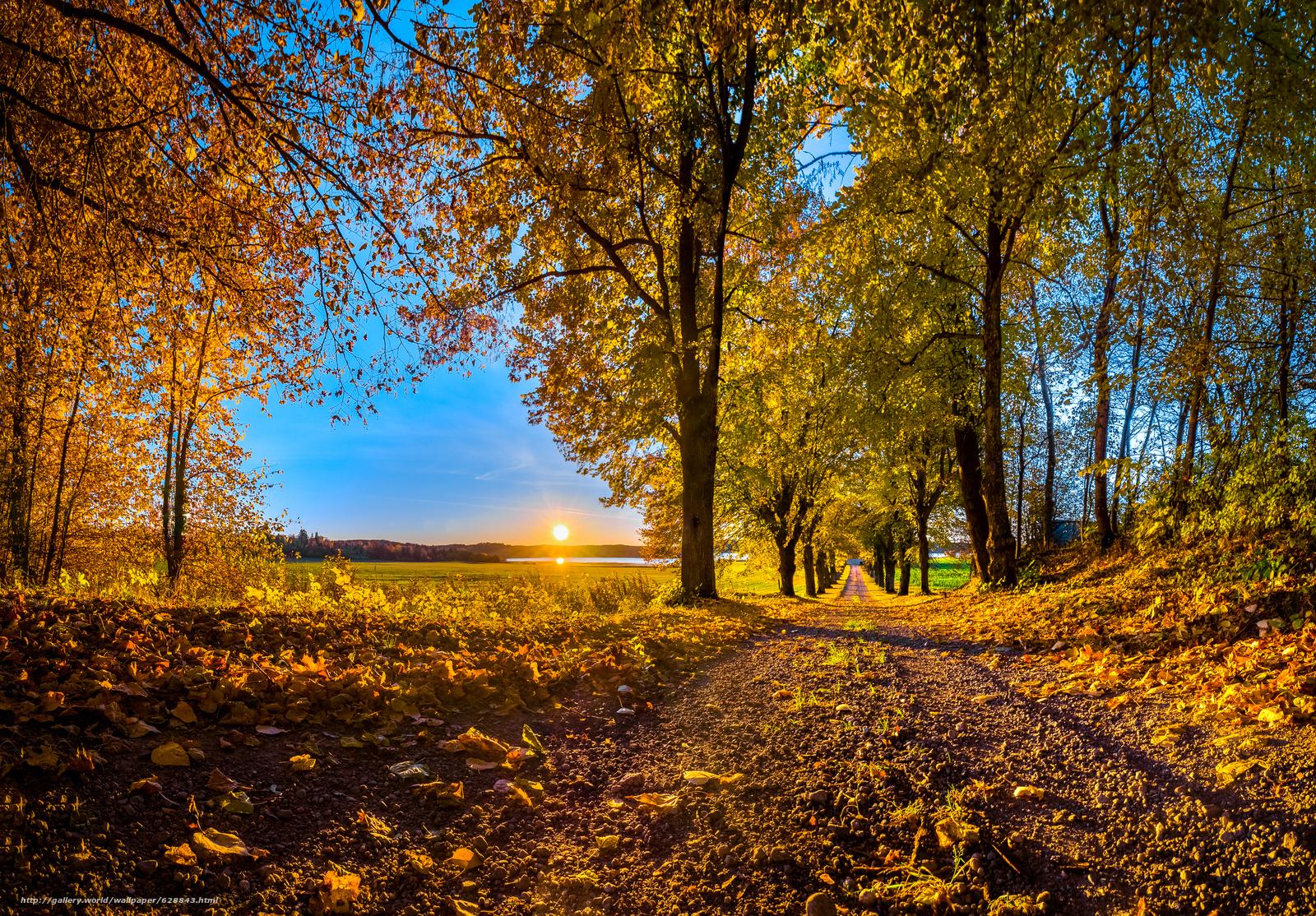 осень, закат, лес, дорога, деревья, пейзаж