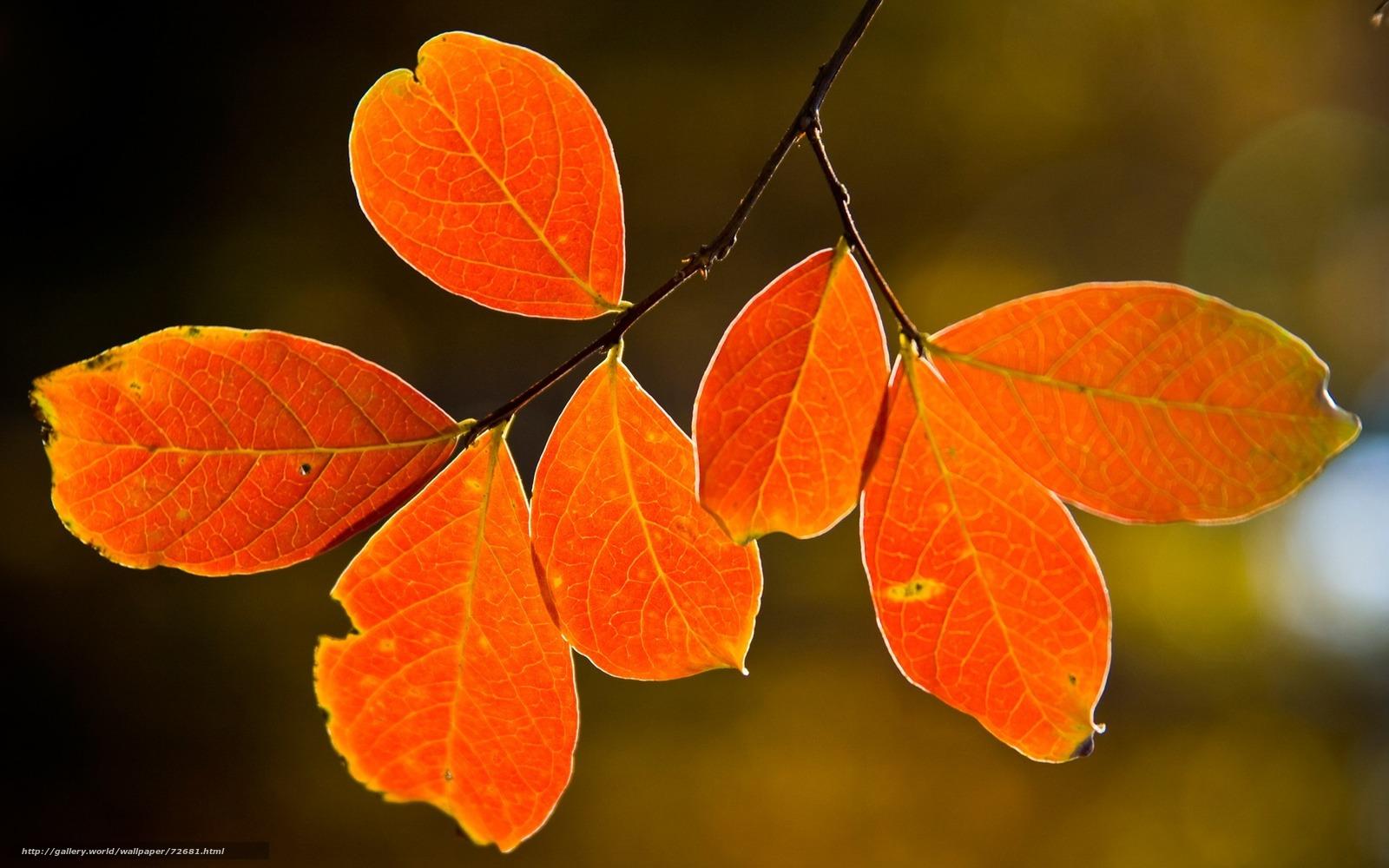 Форма листя дерев фото 27 фотография