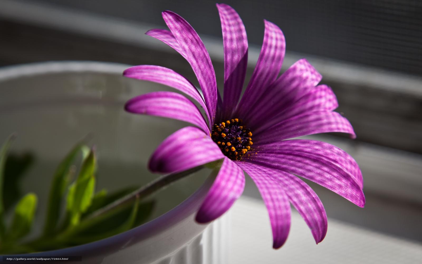 Фото цветы на заставку