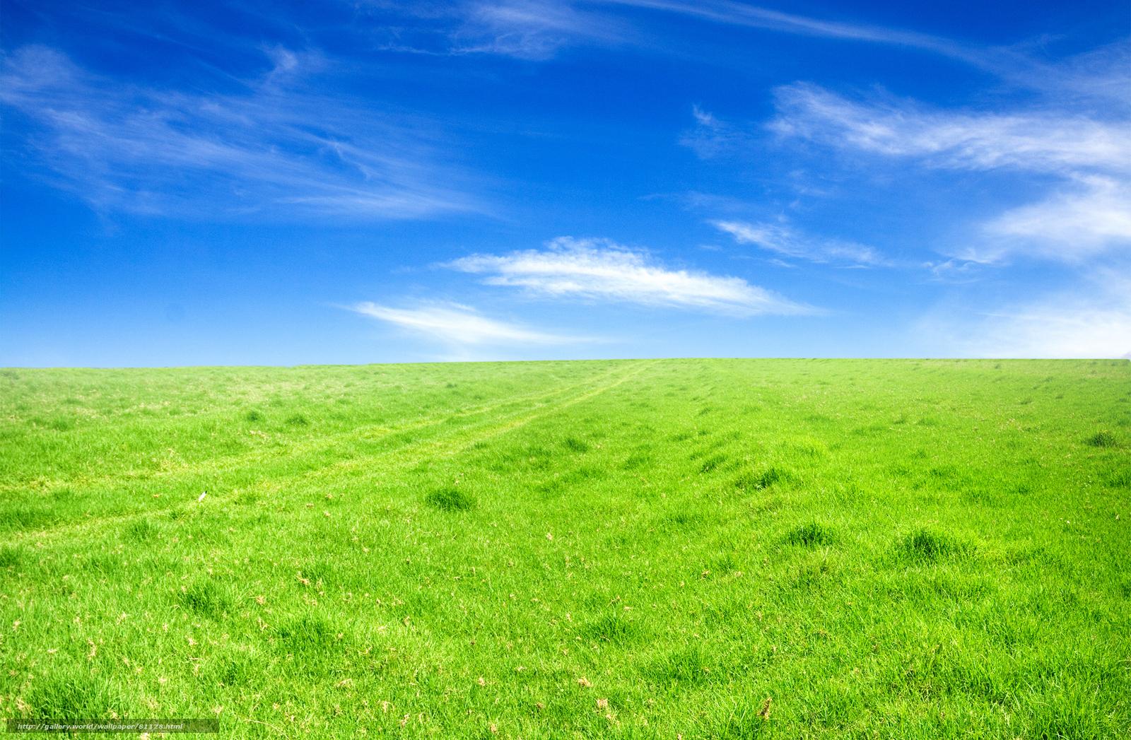 Поле поля небо красивые обои фон