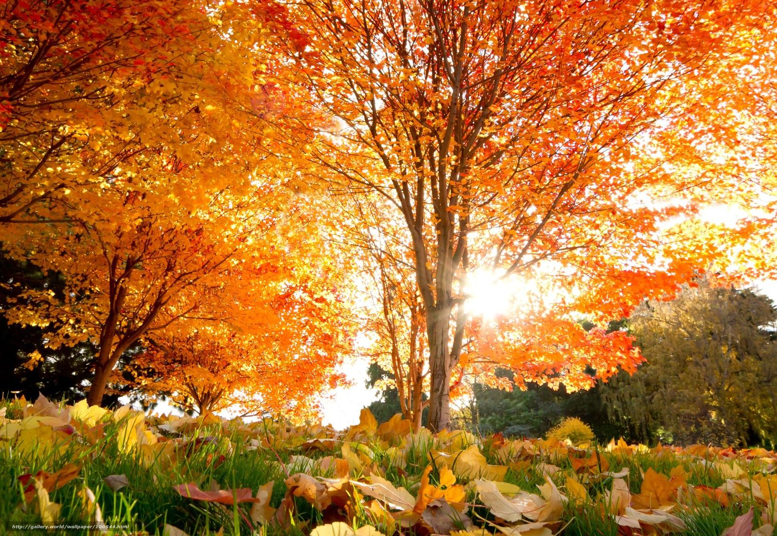 Скачать обои осень красивые деревья