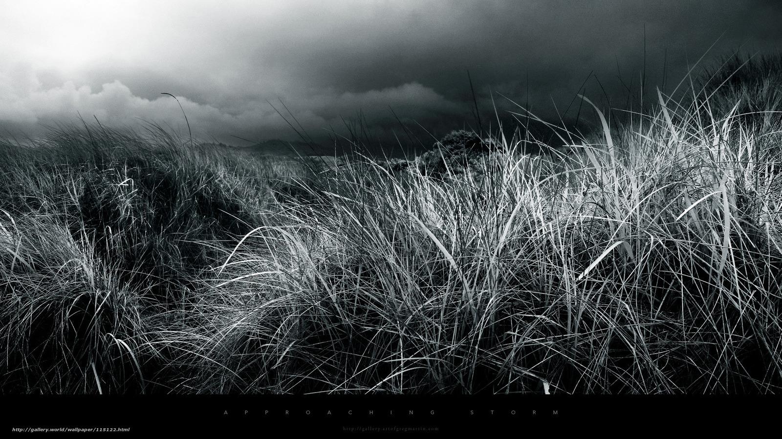 Tlcharger fond d 39 ecran herbe sombre noir et blanc fonds for Fond ecran sombre