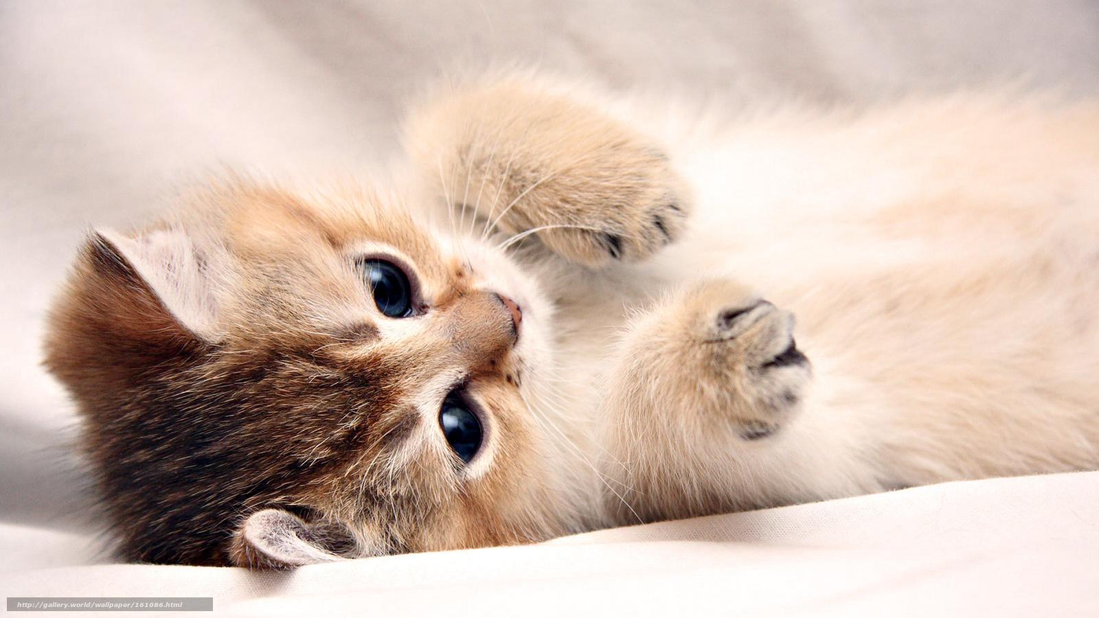 tlcharger fond d 39 ecran chaton mignon fonds d 39 ecran gratuits pour votre rsolution du bureau. Black Bedroom Furniture Sets. Home Design Ideas