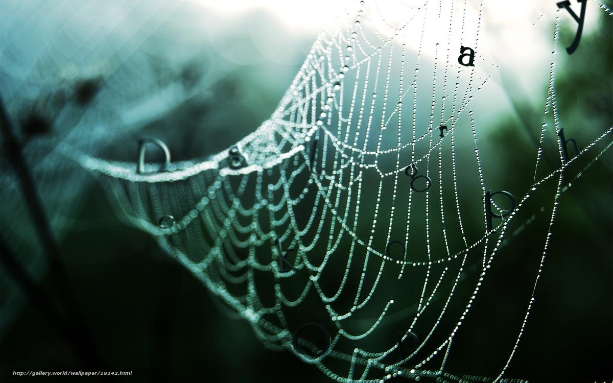 Download Wallpaper Web Drops Forest Rain Free Desktop