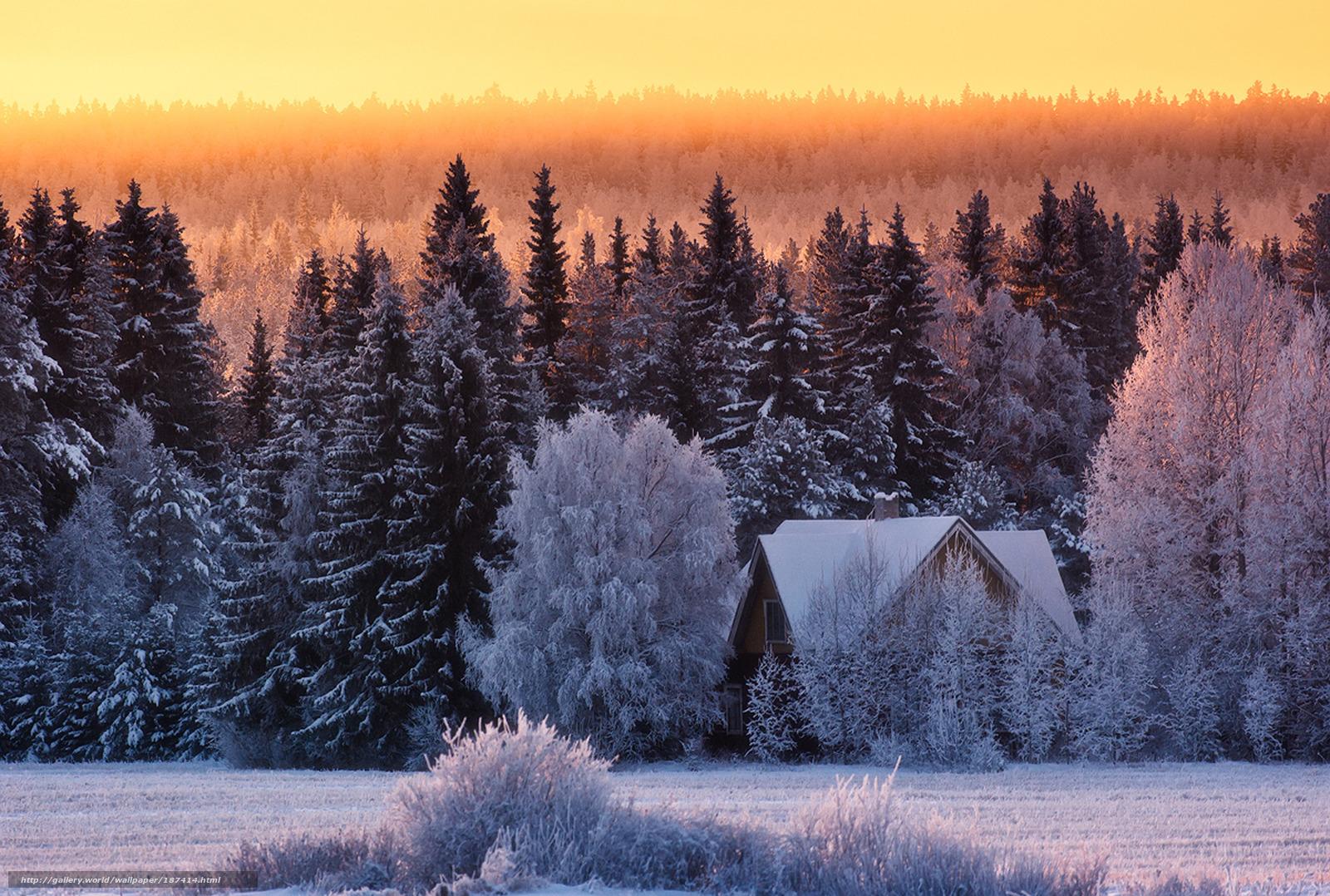 Scaricare gli sfondi inverno gelo foresta neve sfondi for Desktop gratis inverno