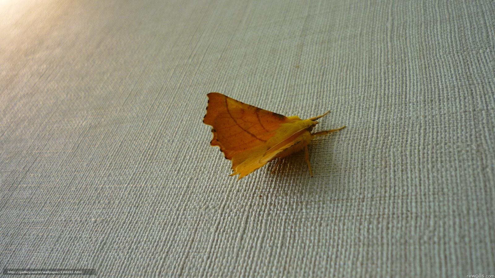 Картинка мотылек