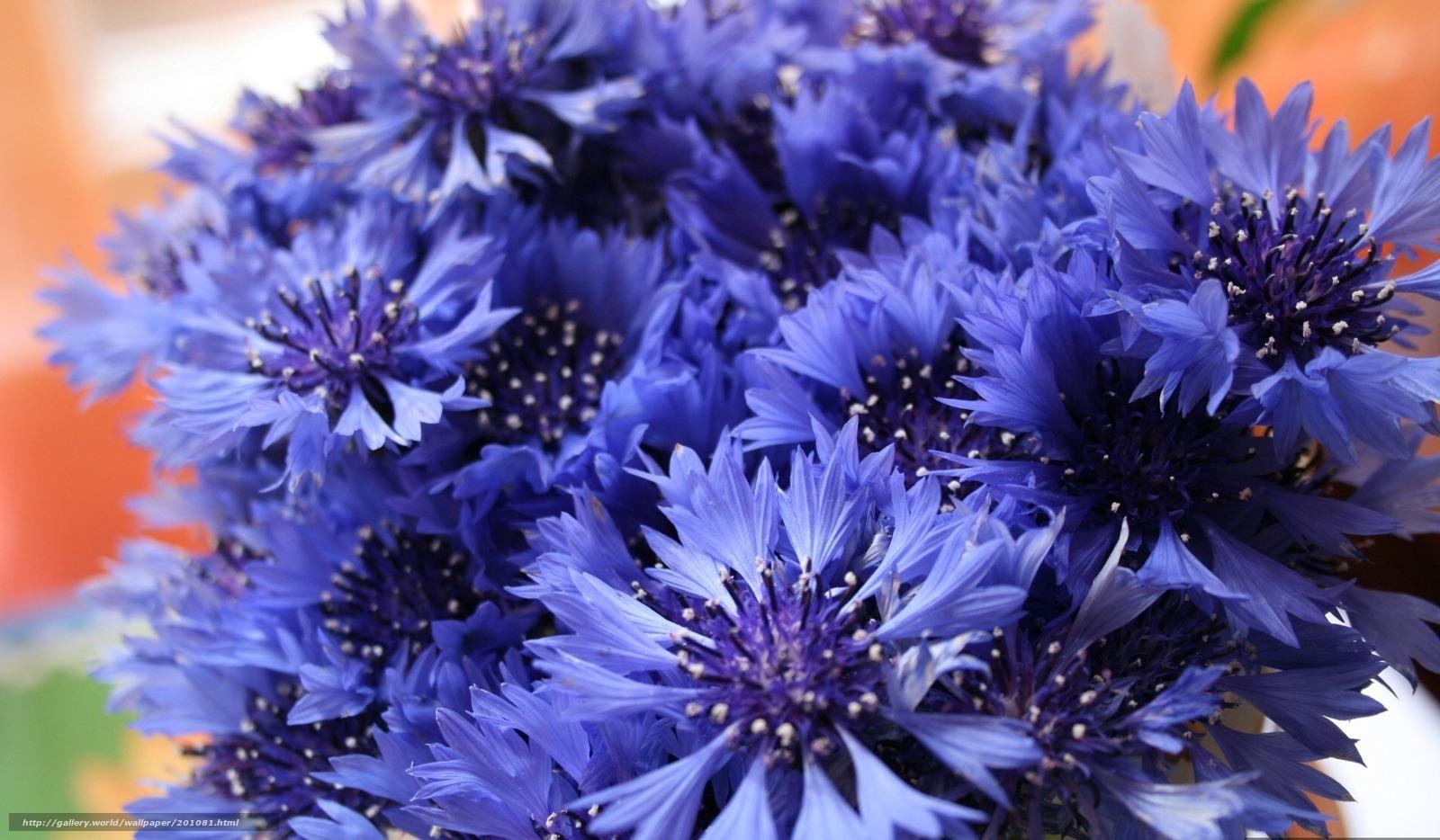 Букетик полевые цветы васильки