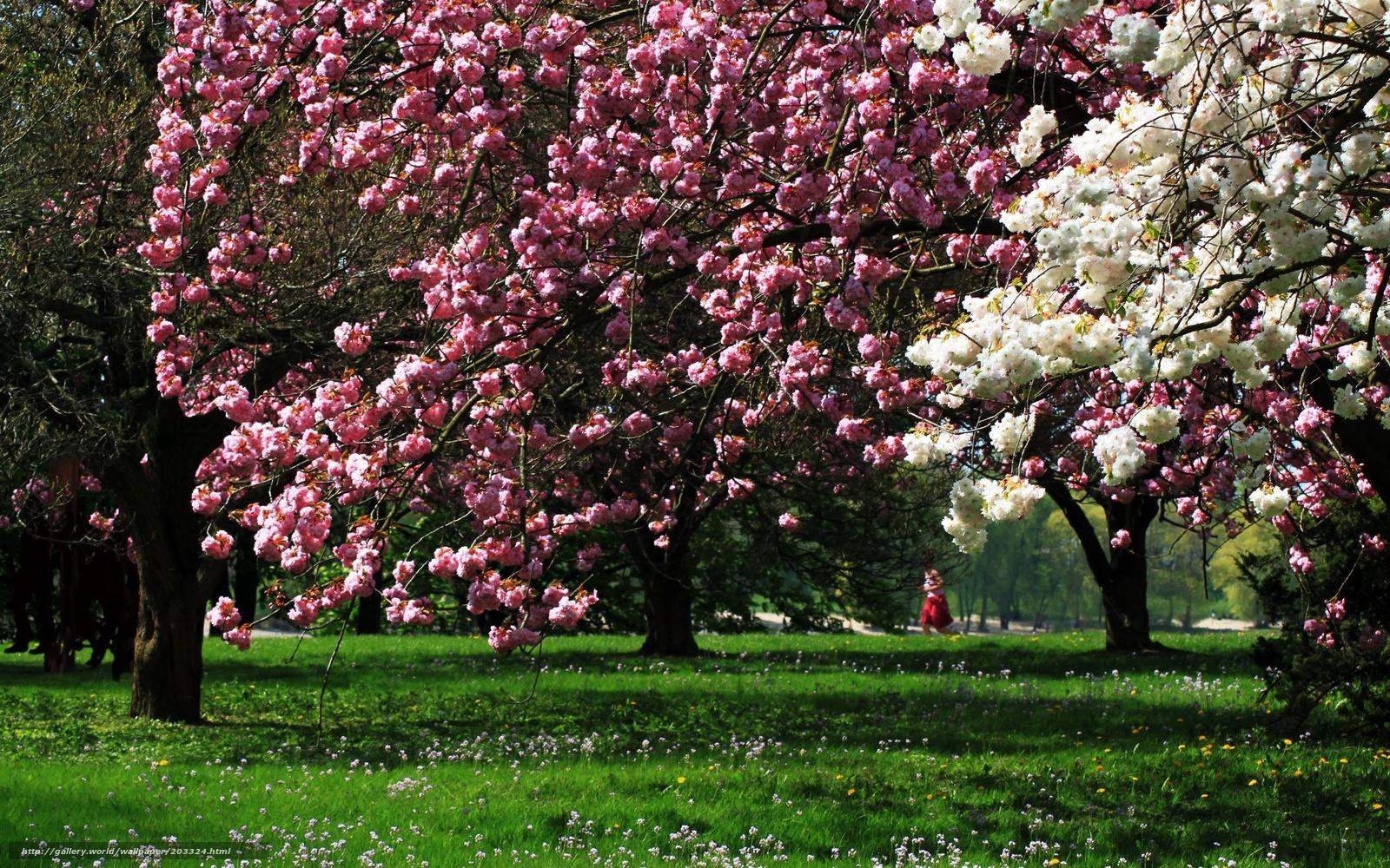 Scaricare gli sfondi primavera fiori primavera d 39 animo for Sfondi desktop primavera