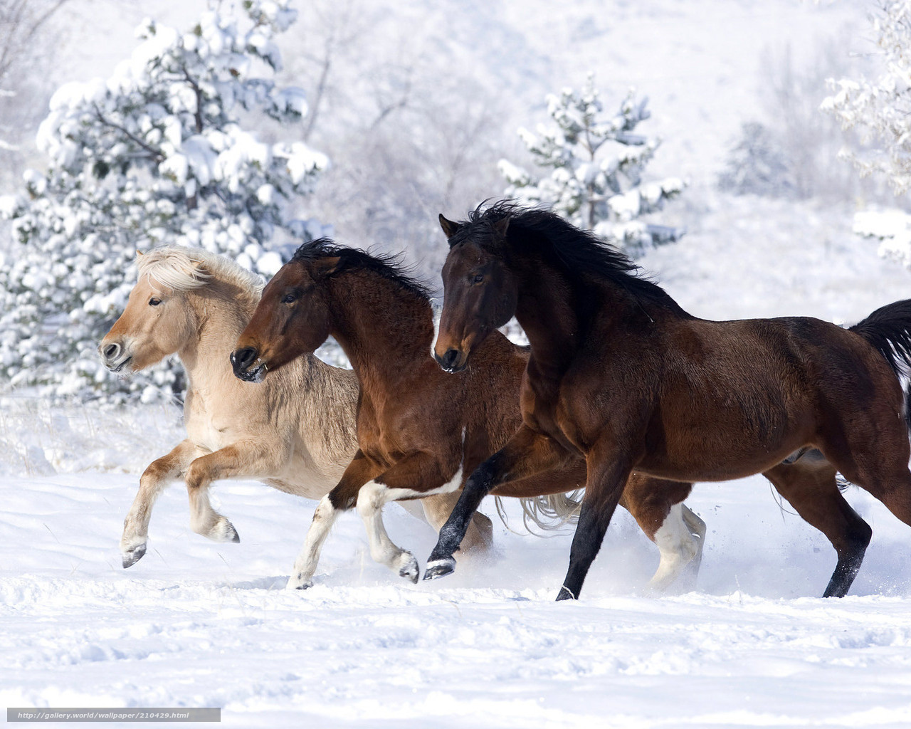 Tlcharger fond d 39 ecran cheval trois neige hiver fonds d for Fond ecran hiver animaux
