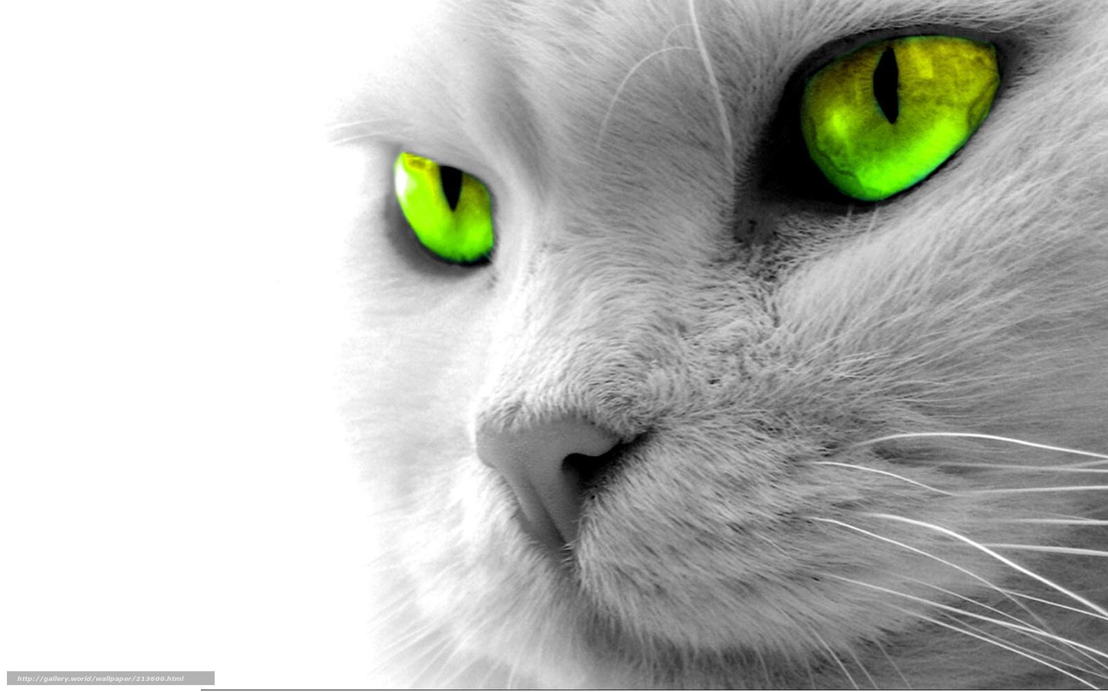Tlcharger fond d 39 ecran chat gris yeux vert fonds d 39 ecran gratuits pour votre rsolution du - Yeux gris vert ...
