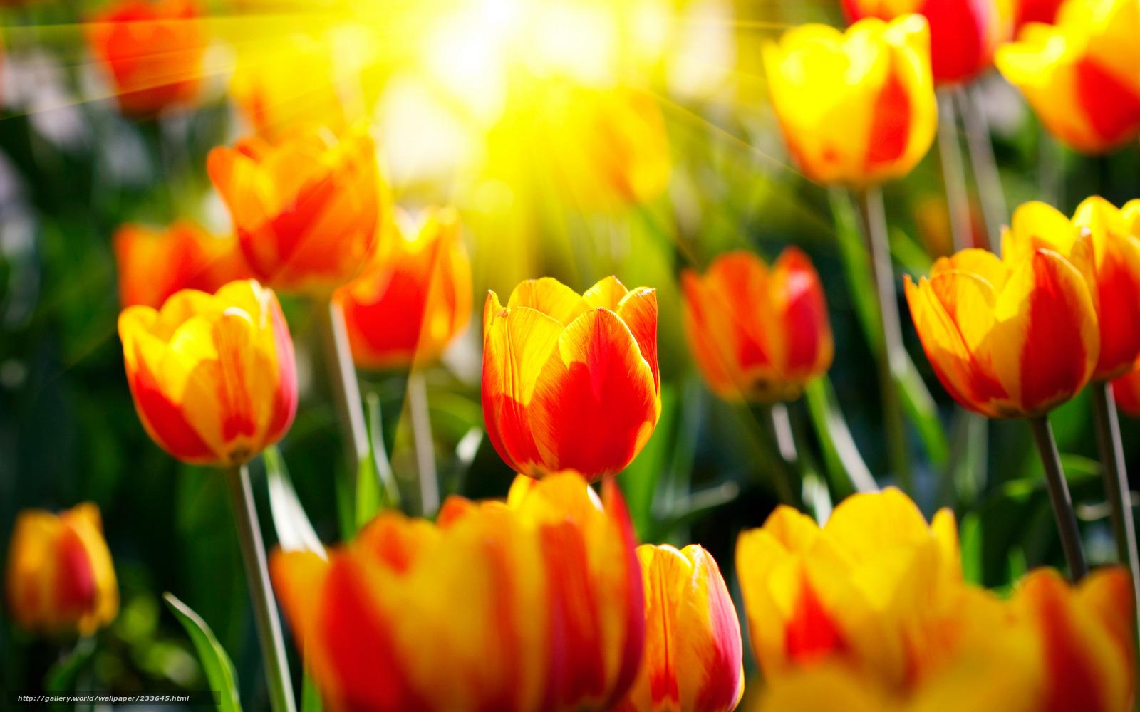 Цветы 233645 ручное изменение размера
