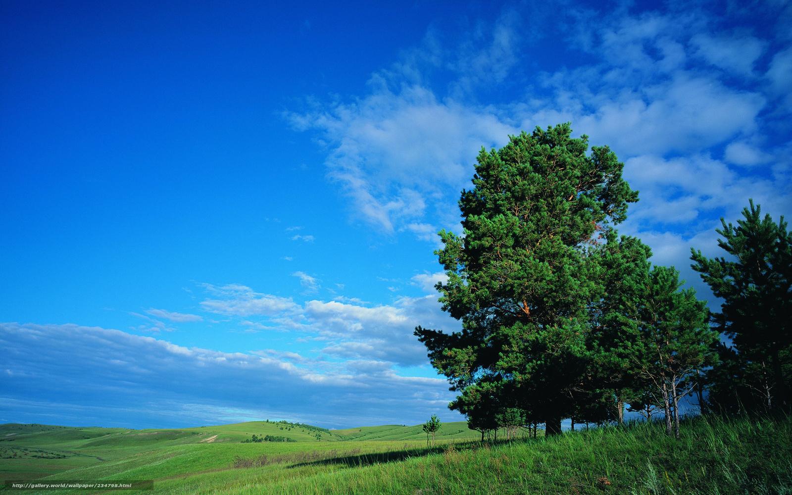 Tlcharger Fond D 39 Ecran Arbre Ciel Prairie Lgumes Verts Fonds D 39 Ecran Gratuits Pour Votre