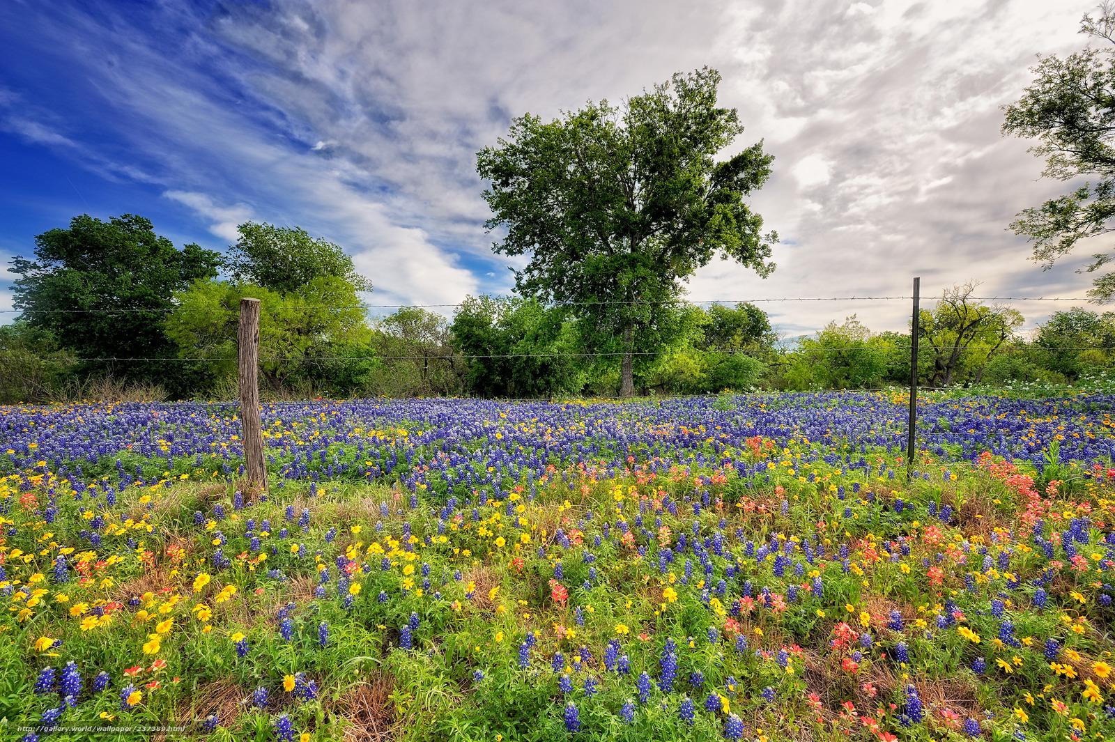 Скачать обои природа весна небо