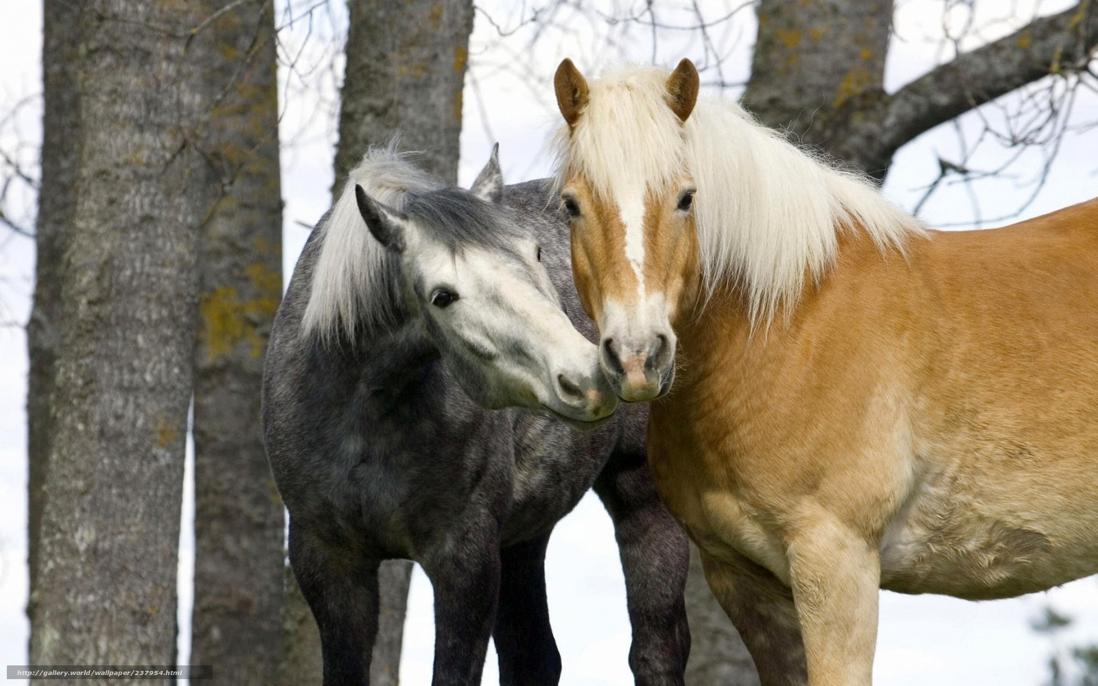 horse wallpaper awesome pair - photo #7