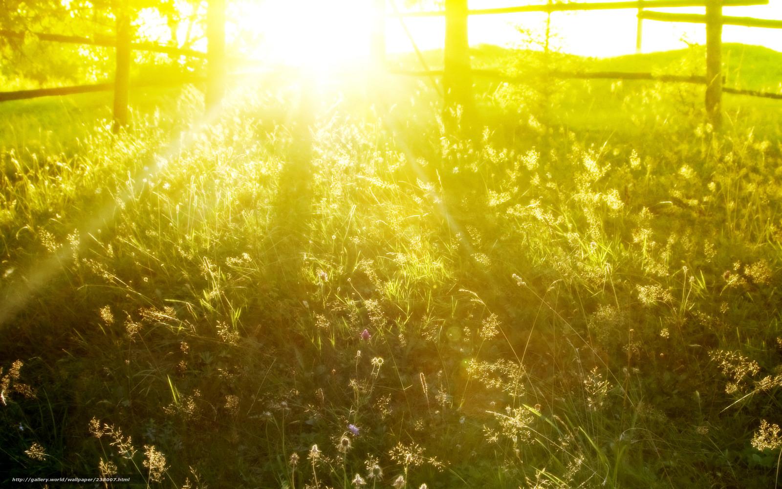 Обои свет красивые фото солнце