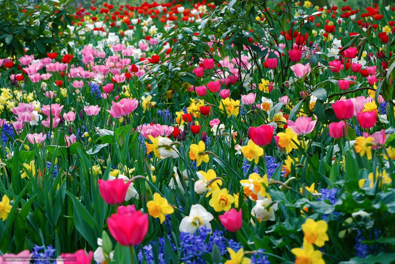 Scaricare gli sfondi fiori diverso molti primavera for Immagini gratis per desktop primavera