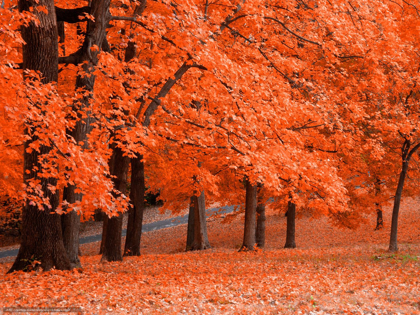 Scaricare gli sfondi spremuta fresca autunno parco for Foto per desktop gratis autunno