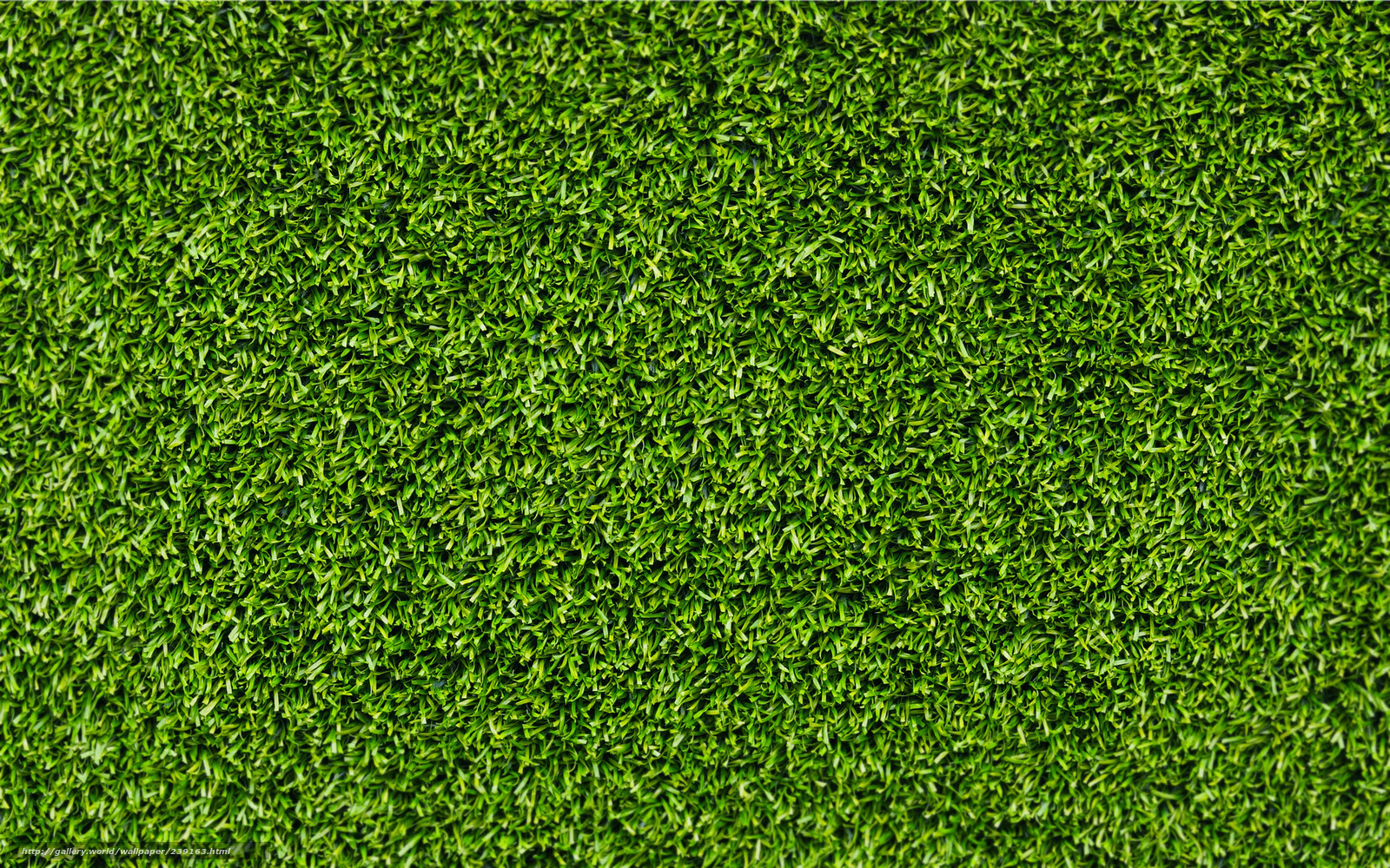 Download wallpaper grass background wallpaper close up photo pictures for your desktop free - Foto wallpaper ...