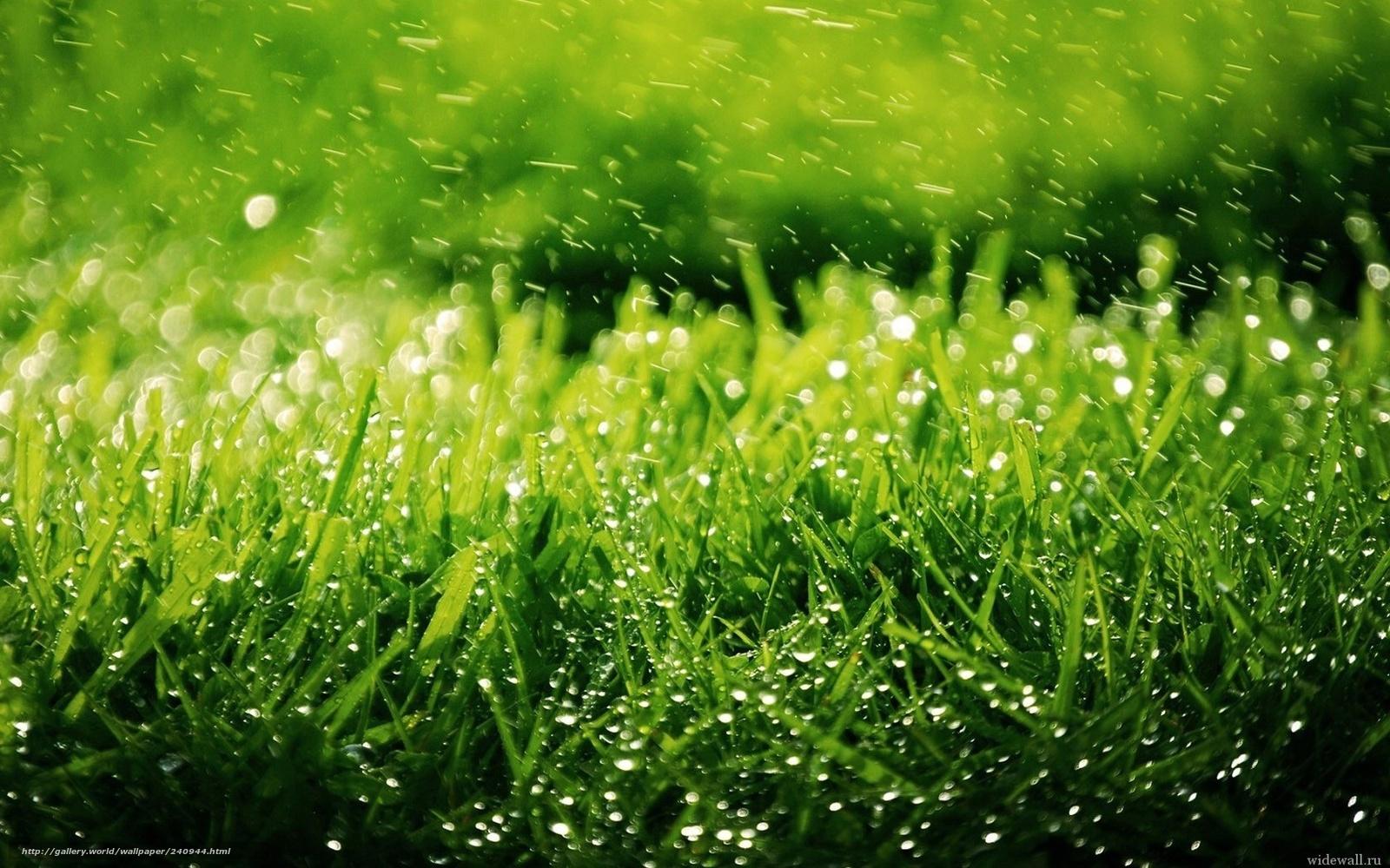 Скачать обои трава, зелень, капли ...: ru.gde-fon.com/download/trava_-zelen_-kapli_-dozhd_-priroda/240944...
