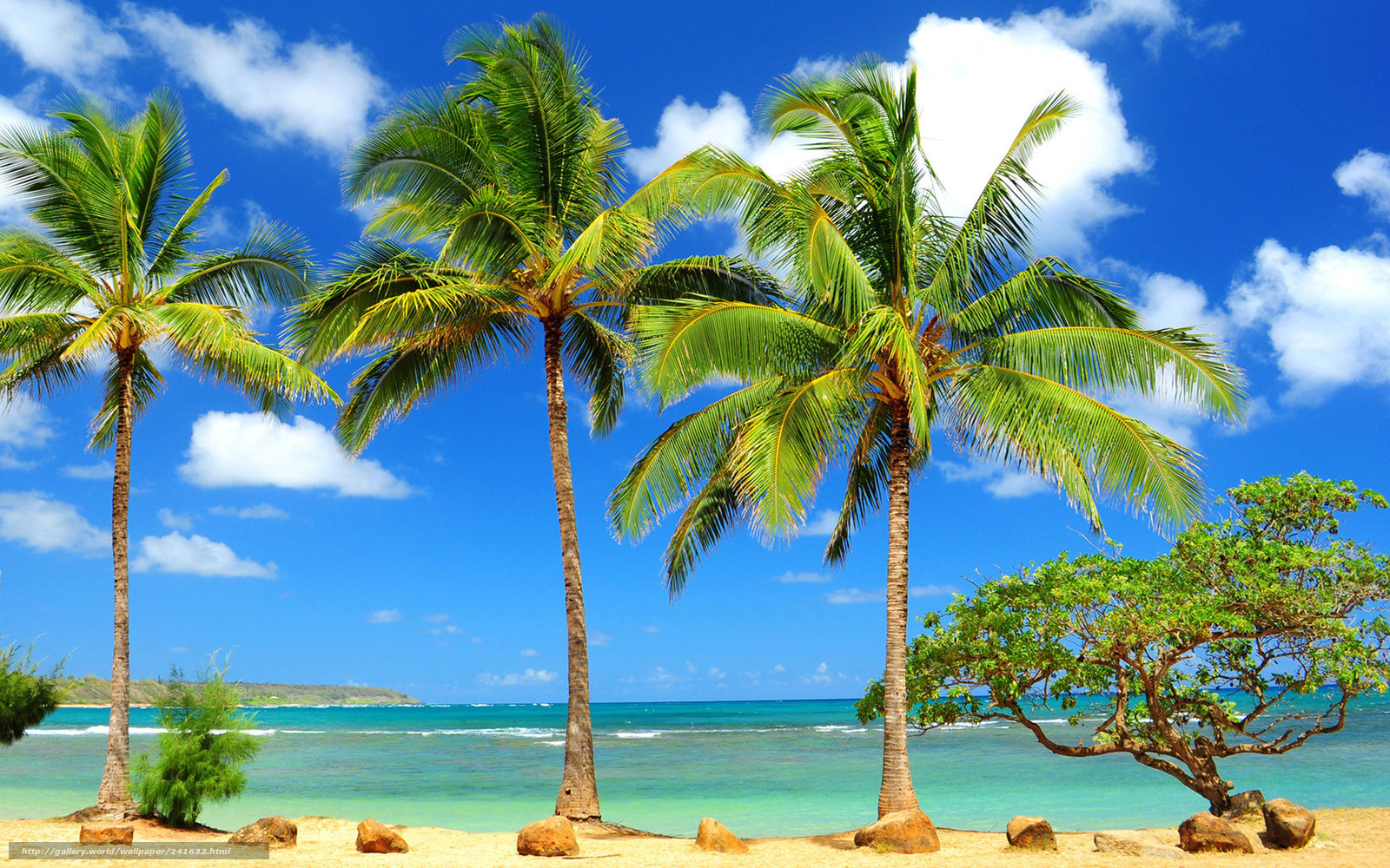 Скачать обои пальмы, море, океан ...: ru.gde-fon.com/download/palmy_more_okean_derevo_krivoe_kamni/241632...