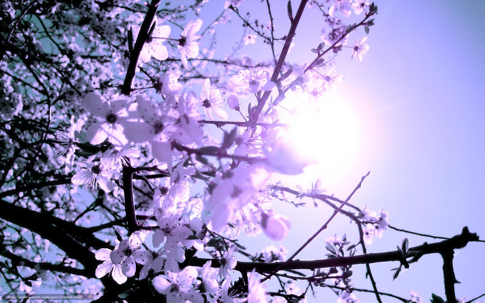 tlcharger fond d 39 ecran printemps branche fleurs soleil fonds d 39 ecran gratuits pour votre. Black Bedroom Furniture Sets. Home Design Ideas