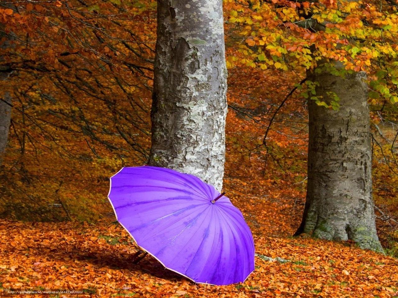 Зонтик осень