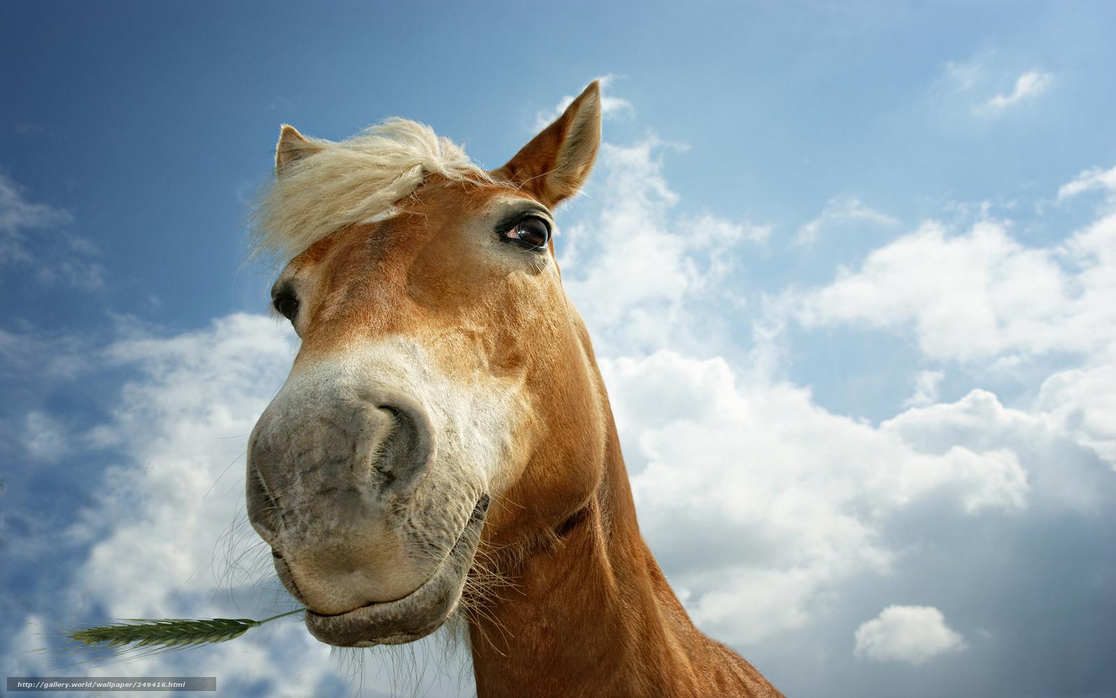 Scenery wallpaper fond d 39 cran gratuit chevaux - Chevaux gratuits ...