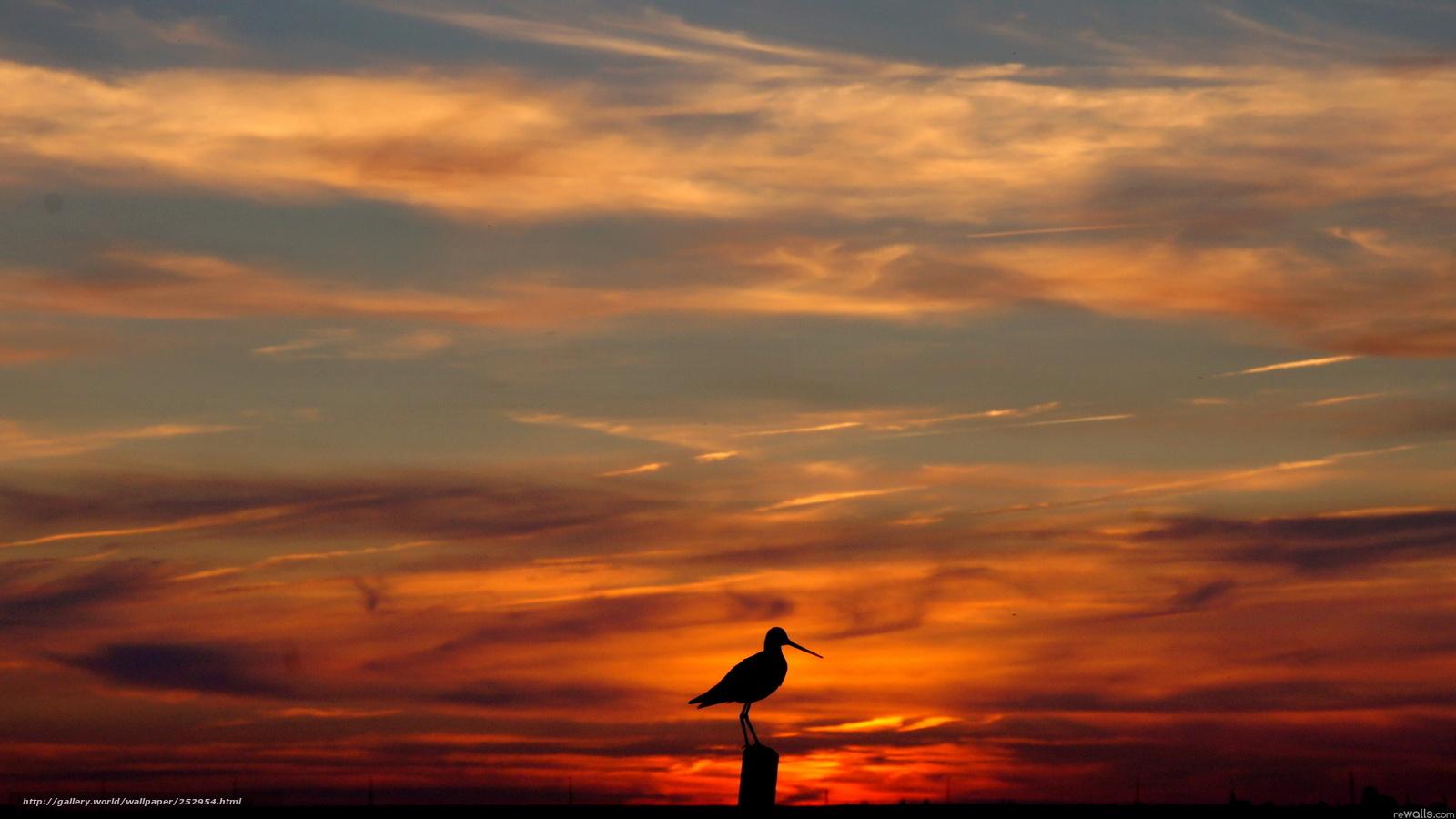 Tlcharger Fond d'ecran ciel, coucher du soleil, oiseau ...