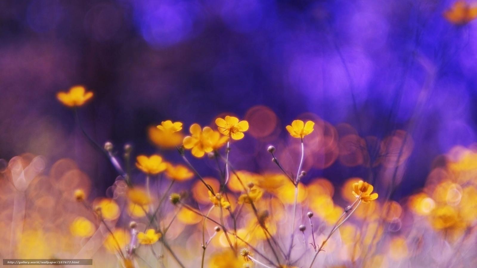 Scaricare gli sfondi fiori natura bellezza sfondi gratis for Sfondi desktop fiori