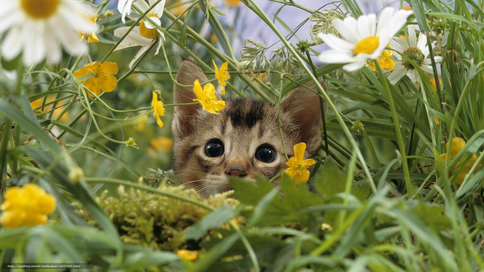 кошка,  цветы,  трава