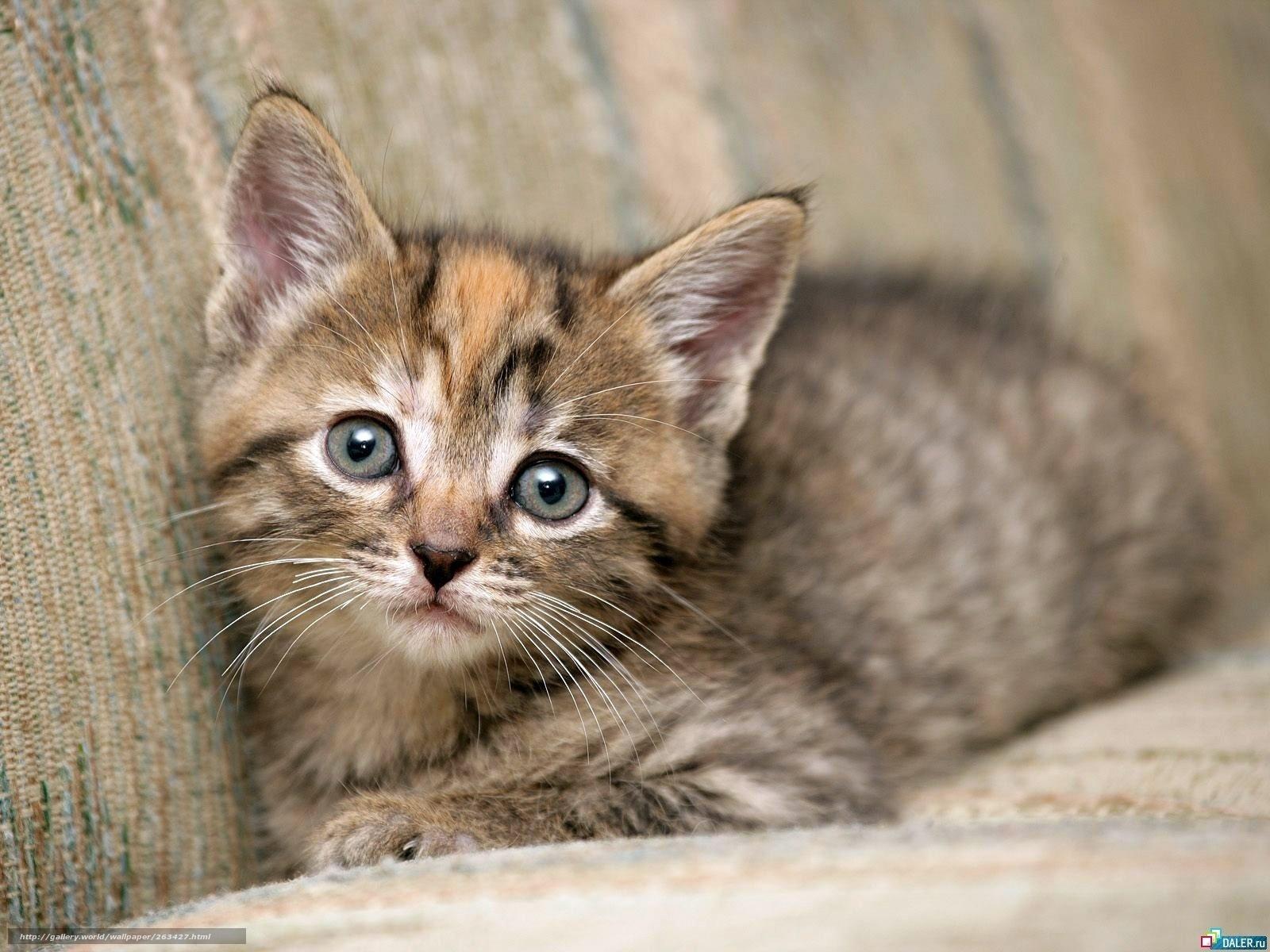 Scaricare gli sfondi gattino gatti micio sfondi gratis for Gatti sfondi desktop gratis