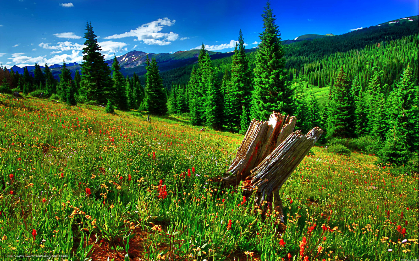 Descargar gratis naturaleza paisaje verano fondos de escritorio en la resolucin 2560x1600 - Fondos de escritorio verano ...