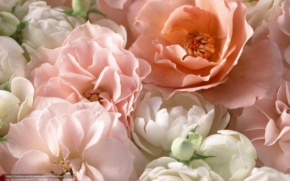 Красивые цветы большие фото