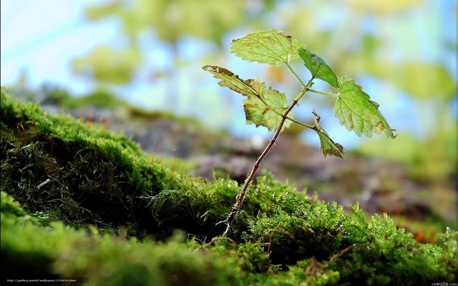 Донской лес  Донской лес