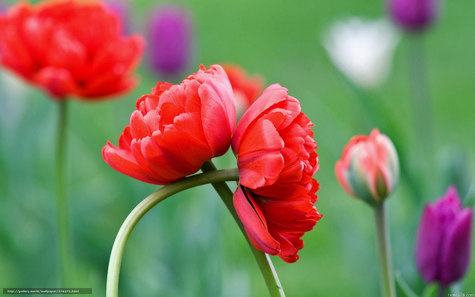 Цветы jpg