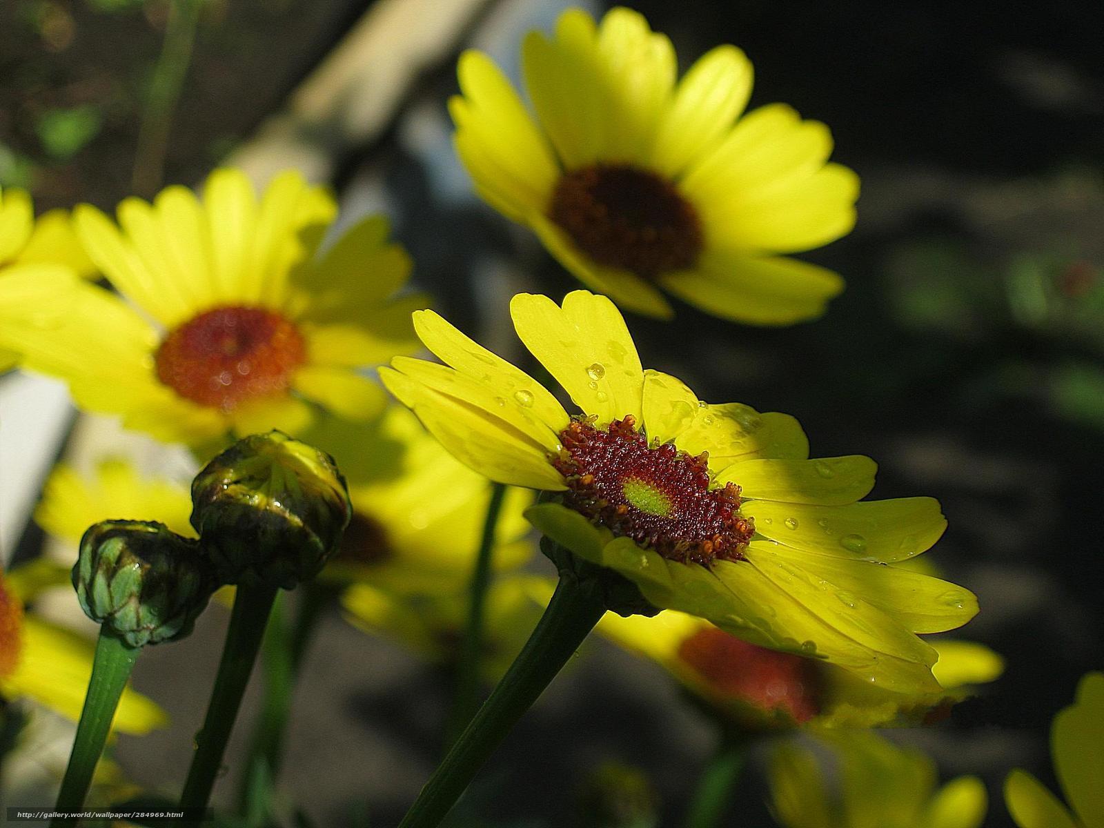 Дождь желтые садовые росинки цветы