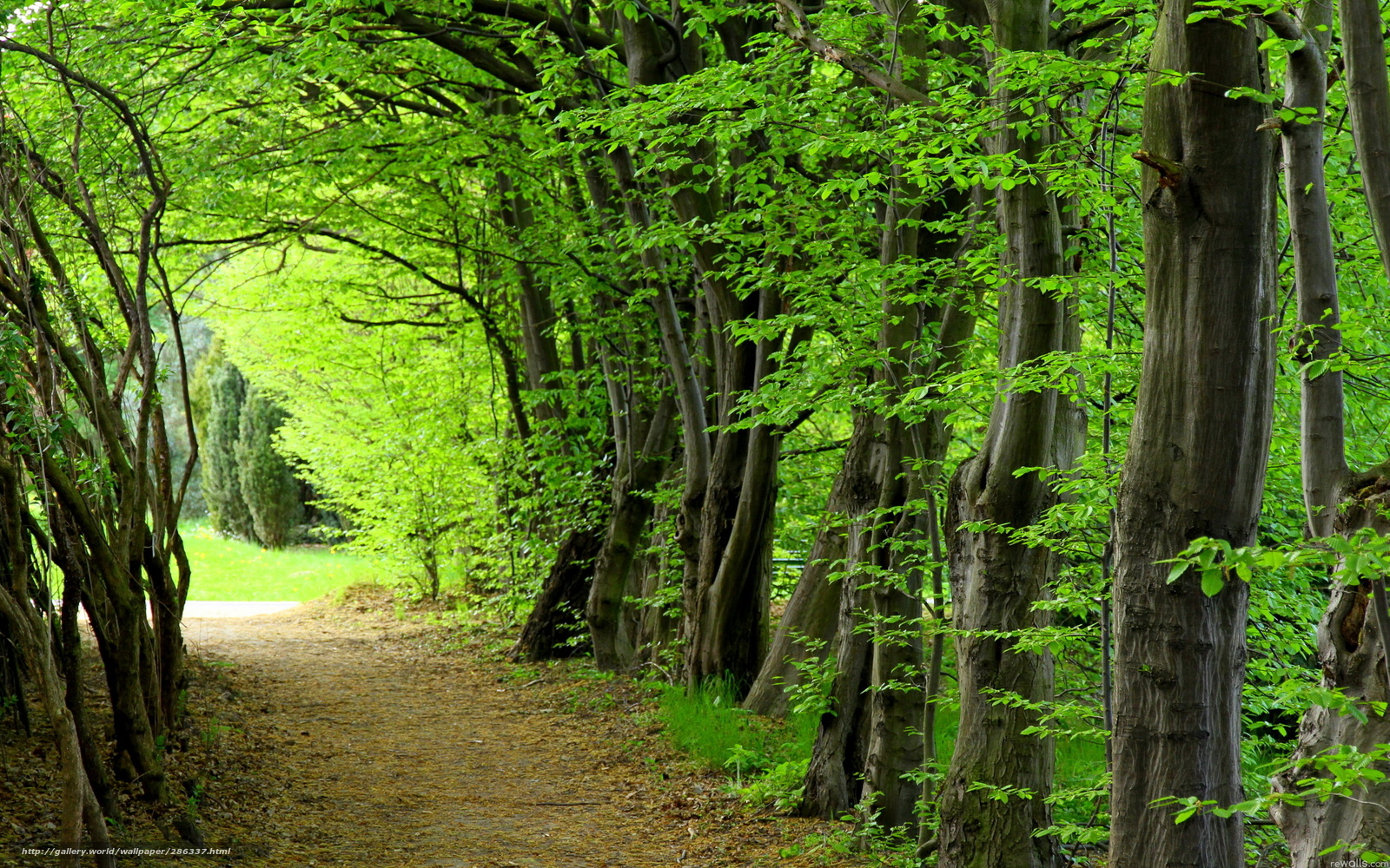 wallpaper summer forest wallpapers - photo #41