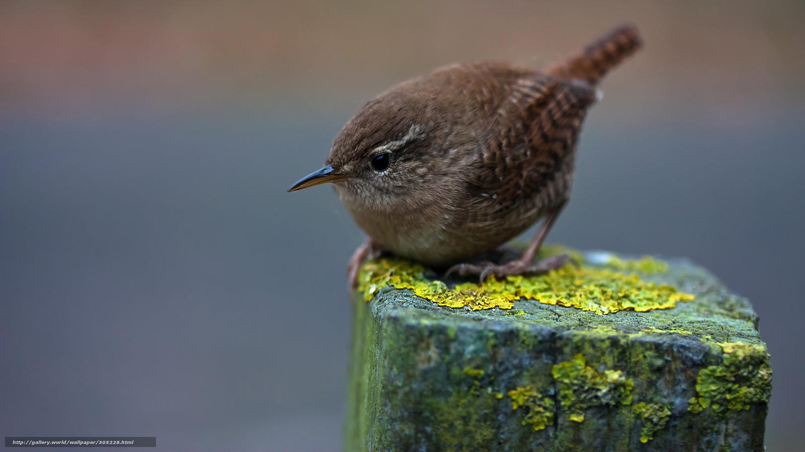 Tlcharger fond d 39 ecran gris petit oiseau sur colonne for Petit oiseau gris