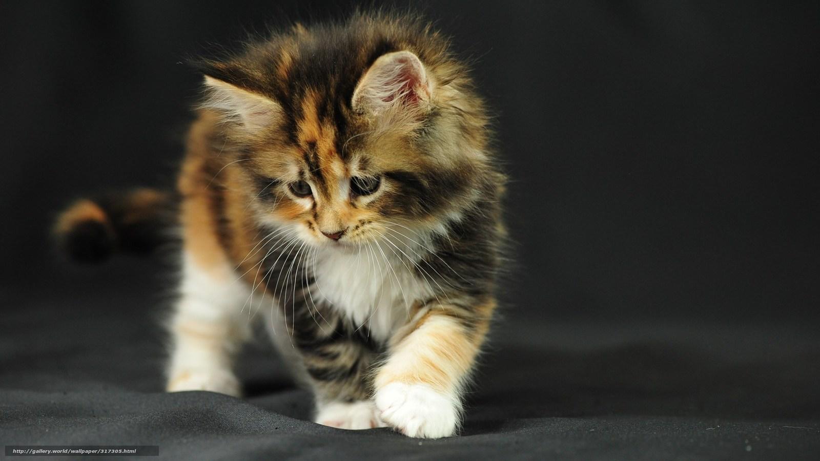 Tlcharger fond d 39 ecran chaton tissu intrt fonds d 39 ecran for Fond ecran animaux hd