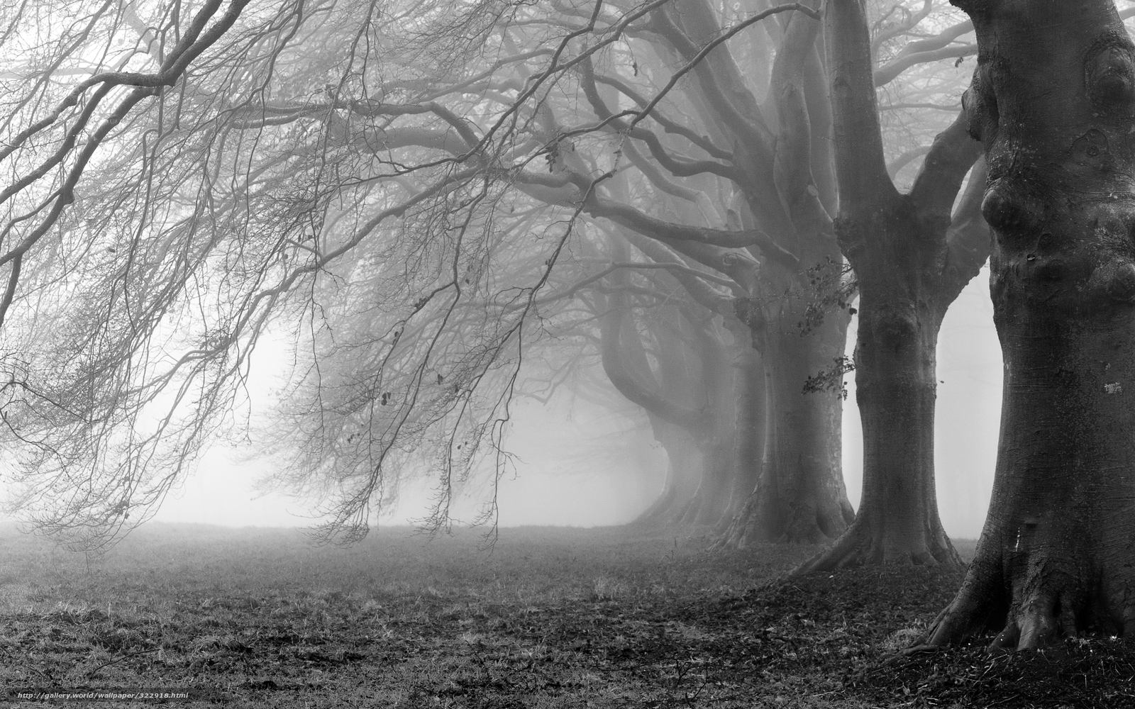 Best wallpaper photography black and white black and white tree desktop wallpaper - Foto wallpaper ...