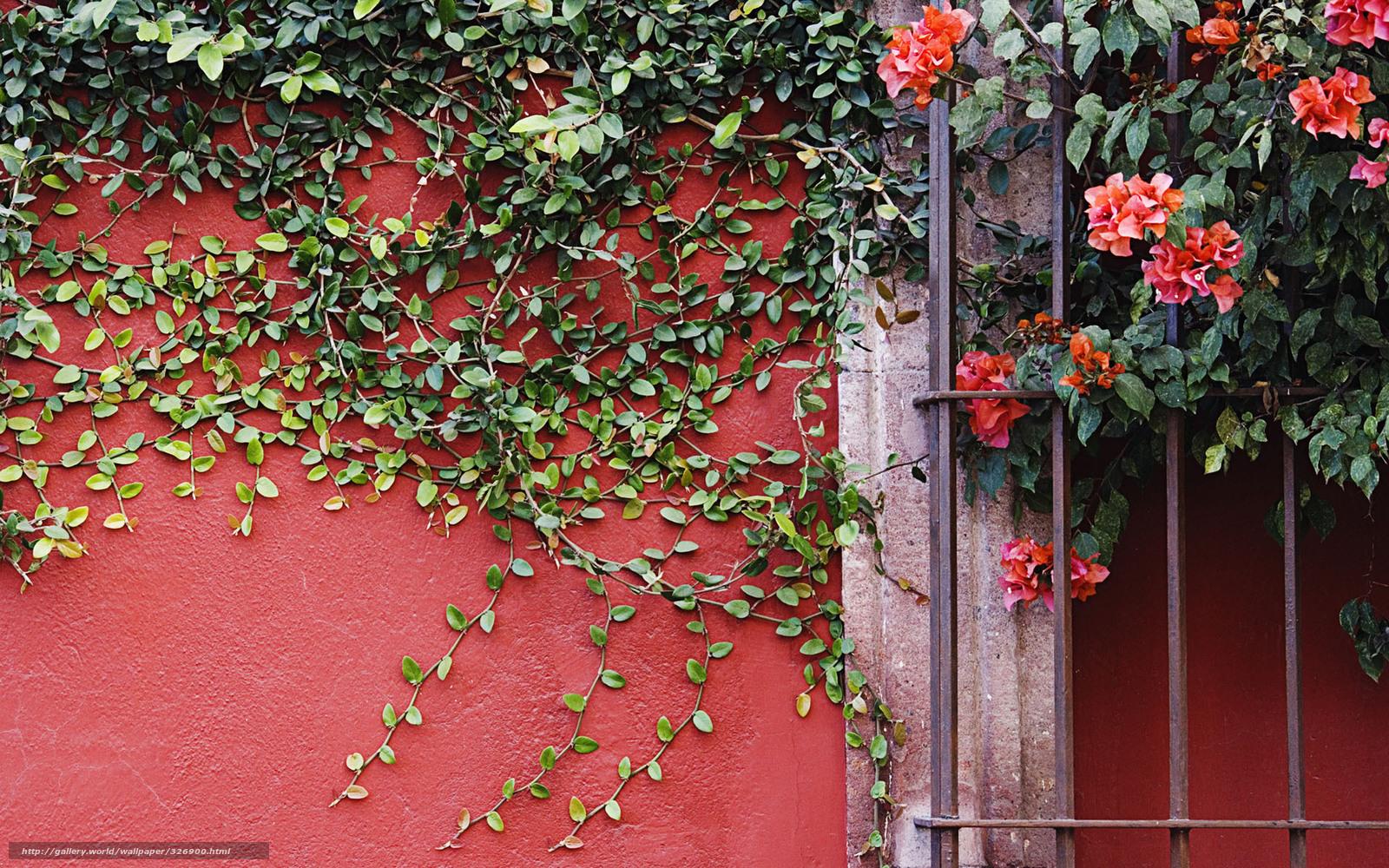 Download wallpaper wall plant liana Flowers free desktop wallpaper in the